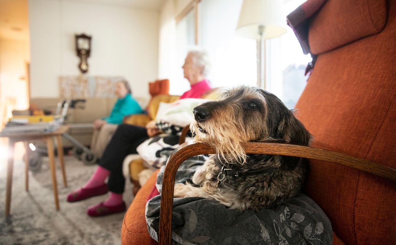 Hilla-koira ja perhekodin asukkaita sohvalla