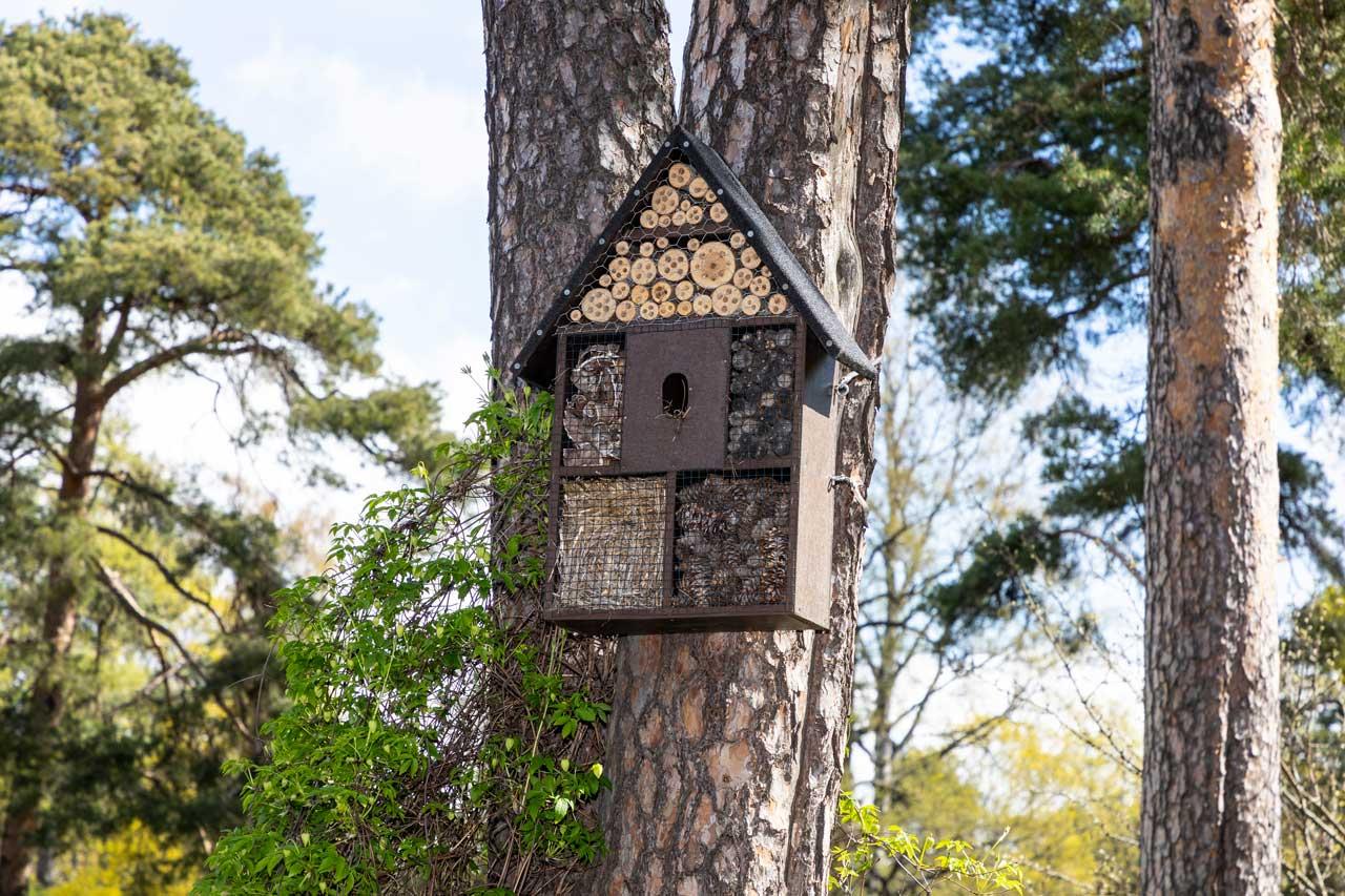 hyänteishotelli puun rungossa